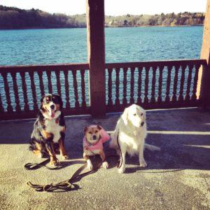 Dogs sitting near lake