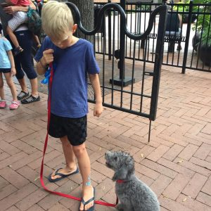 puppy-training-charlottesville