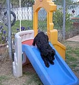 Puppy Going Down Slide