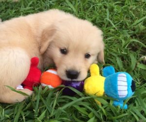 Puppy Training Charlottesville, Waynesboro and Staunton Virginia
