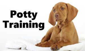Potty Training for Dogs