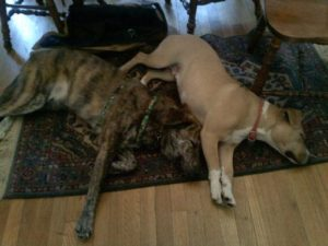 Dogs Napping on rug