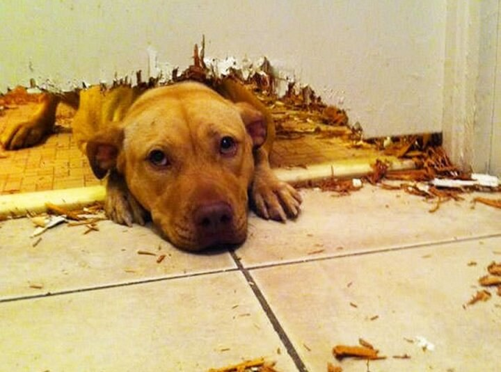 Dog Chewed through Door