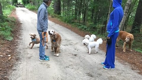 Five Dogs on a Walk Through the Woods