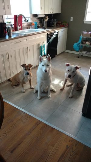 Three Dogs in the Kitchen
