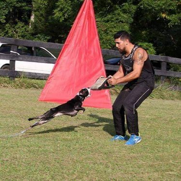 man training dog